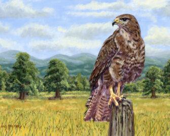 Buzzard Oil Painting