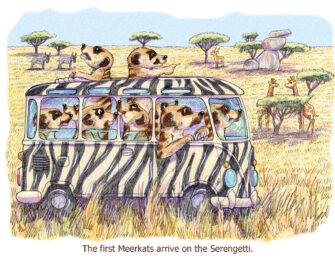 """The first Meerkats arrive on the Serengetti."""
