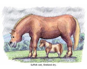 Suffolk wet, Shetland dry