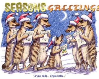 Christmas Meerkats