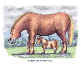 Suffolk wet Shetland dry